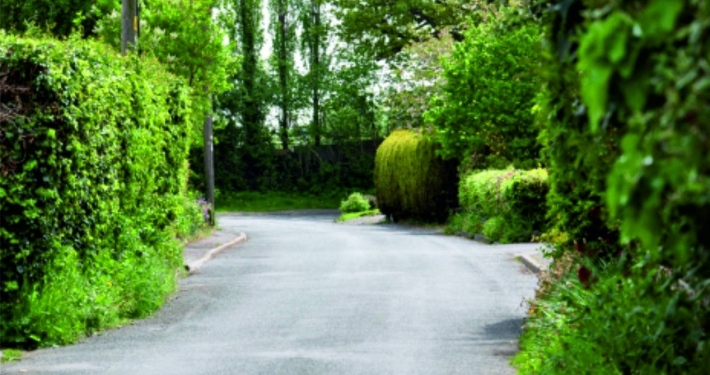Road scene Tom Cat Lane Bickerton. Lush green hedges with sharp bend